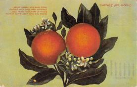 top014301 - Fruit Assorted