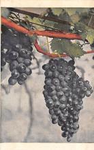top014303 - Fruit Assorted