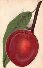 top014305 - Fruit Assorted