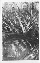 top014369 - Fruit Assorted