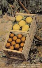 top014391 - Fruit Assorted