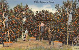 top014401 - Fruit Assorted