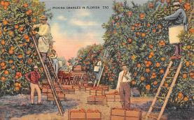 top014403 - Fruit Assorted