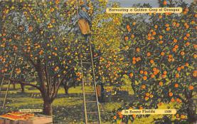 top014407 - Fruit Assorted
