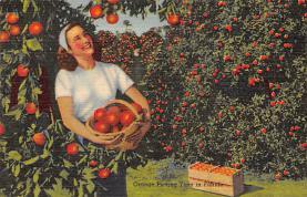 top014409 - Fruit Assorted