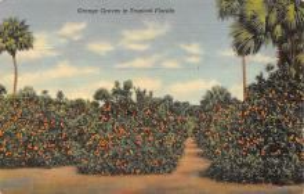 top014411 - Fruit Assorted