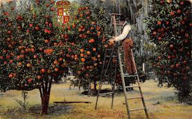 top014413 - Fruit Assorted