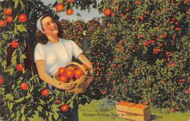 top014415 - Fruit Assorted