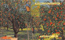 top014419 - Fruit Assorted