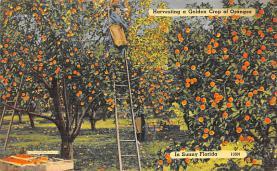 top014435 - Fruit Assorted
