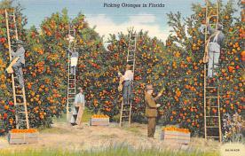 top014443 - Fruit Assorted
