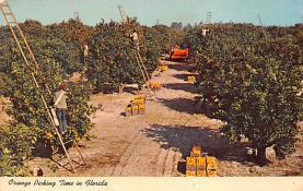 top014445 - Fruit Assorted