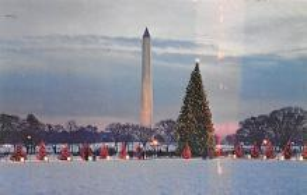 top015463 - Christmas Trees Post Card