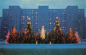top015493 - Christmas Trees Post Card