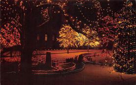 top015529 - Christmas Trees Post Card