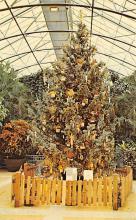 top015531 - Christmas Trees Post Card