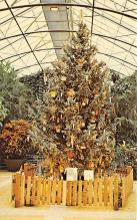 top015537 - Christmas Trees Post Card
