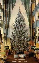 top015543 - Christmas Trees Post Card