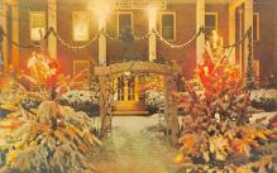 top015571 - Christmas Trees Post Card