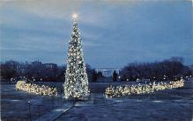 top015575 - Christmas Trees Post Card