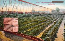 top015861 - Farming Post Card