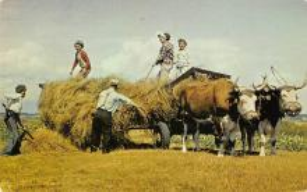 top015939 - Farming Post Card
