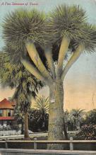 top016261 - Cactus Post Card
