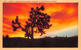 top016263 - Cactus Post Card