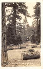 top021687 - Scouts Post Card