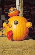 top022021 - Pumpkin