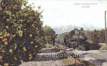 tra006271 - The Orange Groves, California, USA Train Trains Locomotive, Steam Engine,  Postcard Postcards