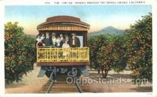 tra006387 - The Orange Groves, California, Usa Train Trains Locomotive, Steam Engine,  Postcard Postcards