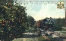 tra006705 - Riding Through Orange Groves, FL, Florida, USA Train Railroad Station Depot Postcards Post Cards