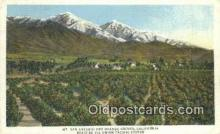 trn001167 - Mount San Antonio And Orange Groves, Union Pacific System, California, CA USA Trains, Railroads Postcard Post Card Old Vintage Antique