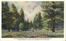 trn001197 - Kaibab National Forest, Cedar City, Utah, UT USA Trains, Railroads Postcard Post Card Old Vintage Antique