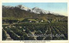 trn001199 - Mount San Antonio And Orange Groves, California, CA USA Trains, Railroads Postcard Post Card Old Vintage Antique