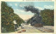 trn001204 - Traveling Through The Orange Groves, California, CA USA Trains, Railroads Postcard Post Card Old Vintage Antique