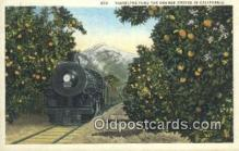 trn001210 - Traveling Thru The Orange Groves In California, CA USA Trains, Railroads Postcard Post Card Old Vintage Antique