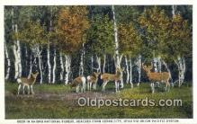 trn001399 - United Pacific System Deer in Kaibab Forest, Cedar City, Utah, UT USA Trains, Railroads Postcard Post Card Old Vintage Antique
