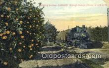 trn001653 - Orange Groves, Southern California, CA USA Trains, Railroads Postcard Post Card Old Vintage Antique