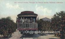 trn001667 - The Limited , Orange Groves, Southern California, CA USA Trains, Railroads Postcard Post Card Old Vintage Antique