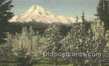 trn002086 - Mt Hood, Oregon, OR USA Trains, Railroads Postcard Post Card Old Vintage Antique