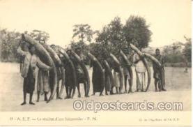 tus001001 - Elephant Tusk Tusks Postcard Postcards