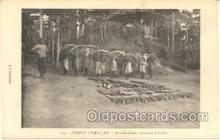 tus001003 - Congo France, Elephant Tusk Tusks Postcard Postcards