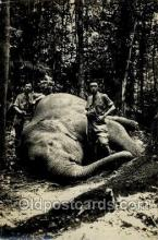 tus001014 - Elephant Tusk Postcard Postcards