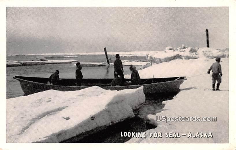 Looking for Seal - Misc, Alaska AK Postcard