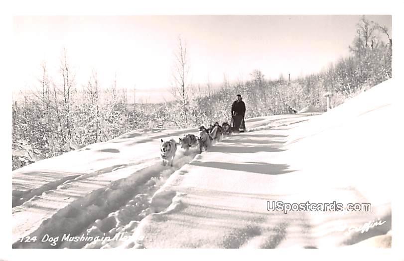 Dog Mushing - Misc, Alaska AK Postcard