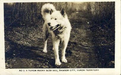 A Yukon Husky Sled Dog - Dawson City, Alaska AK Postcard