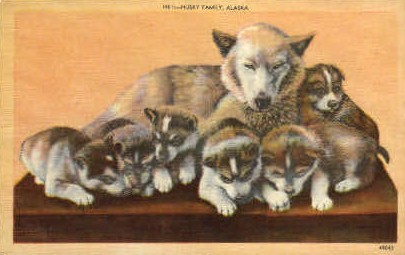 Husky Family - Misc, Alaska AK Postcard