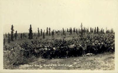 Reindeer Herd - Cantwell, Alaska AK Postcard